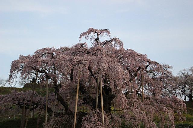 2016_0410三春滝桜_2112