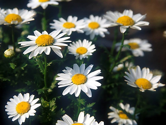 Flower1-001_m640